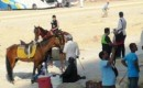 No control whatsoever over hawkers or horses